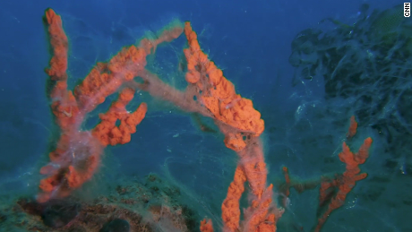 Turkey Canakkale underwater marine mucilage Damon pkg intl hnk vpx_00010326