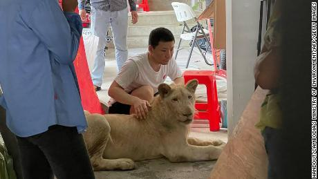 The lion was kept at a house in the Cambodian campital, Phnom Penh.