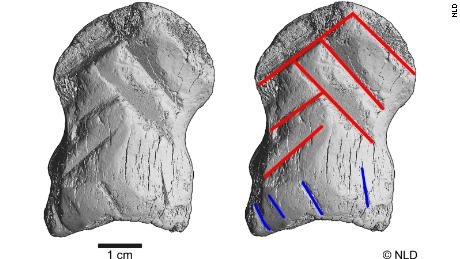 Computerized topography scans of the engraved bone showed six lines that show the shape of the chevron symbol.