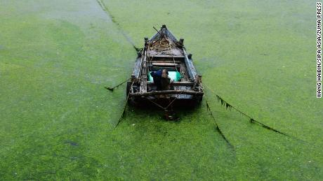 Algae blooms on the coast of Qingdao, China, on June 18.