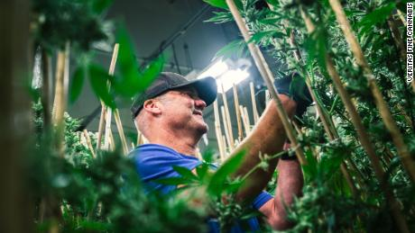 One of the biggest names in craft beer is hopping over to the cannabis business