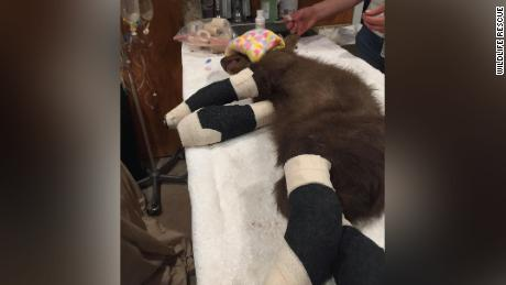 A wildlife rescue group is caring for the bear rescued in a small California community.