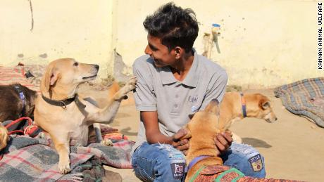 An employee at KAW interacts with rescued strays at the KAW shelter.