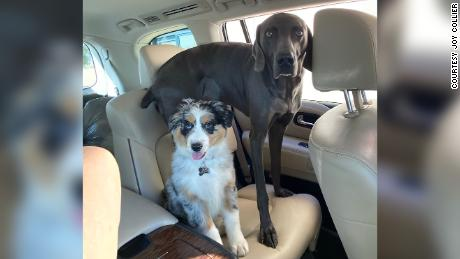 Joy Collier's dogs Nellie and Charley have been missing since May 2020 after she left them in the care of a Rover sitter. She said she's done everything from take out billboards to hiring scent handlers and drones in an attempt to find them.