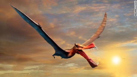 This is an artist's impression of the terrifying pterosaur.
