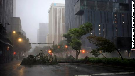 Trees sway in the wind from Hurricane Ida on Sunday in downtown New Orleans.