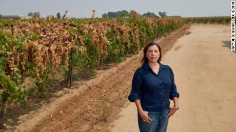 Nicole Parra, a former state assemblywoman, stands next to a dried-on-the-vine raisin orchard.