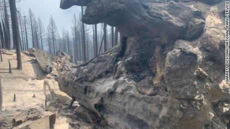 Dead sequoia trees in Longmeadow Grove in Sequoia National Forest.