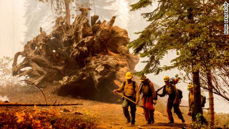Firefighters battle the Windy Fire as it burns in the Trail of 100 Giants grove of Sequoia National Forest on September 19.