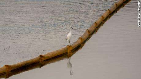 A Great Egret perches on a boom trapping oil from entering the Talbert Marsh.