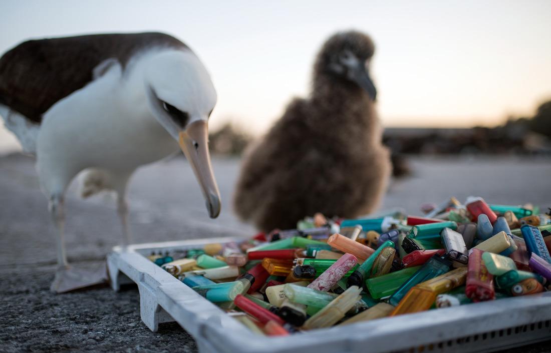 Plastic island: How our trash is destroying paradise - CNN com