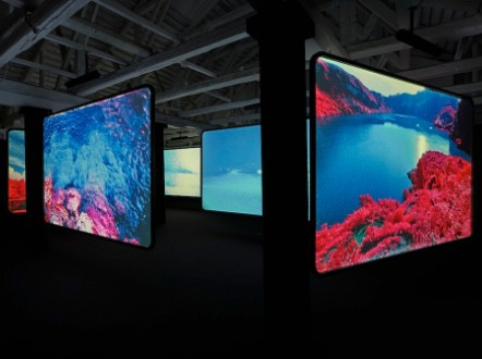 Courtesy of Richard Mosse and Jack Shainman Gallery