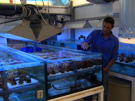 Assaf Shaham tends to his artificial coral reef. - (CNN)