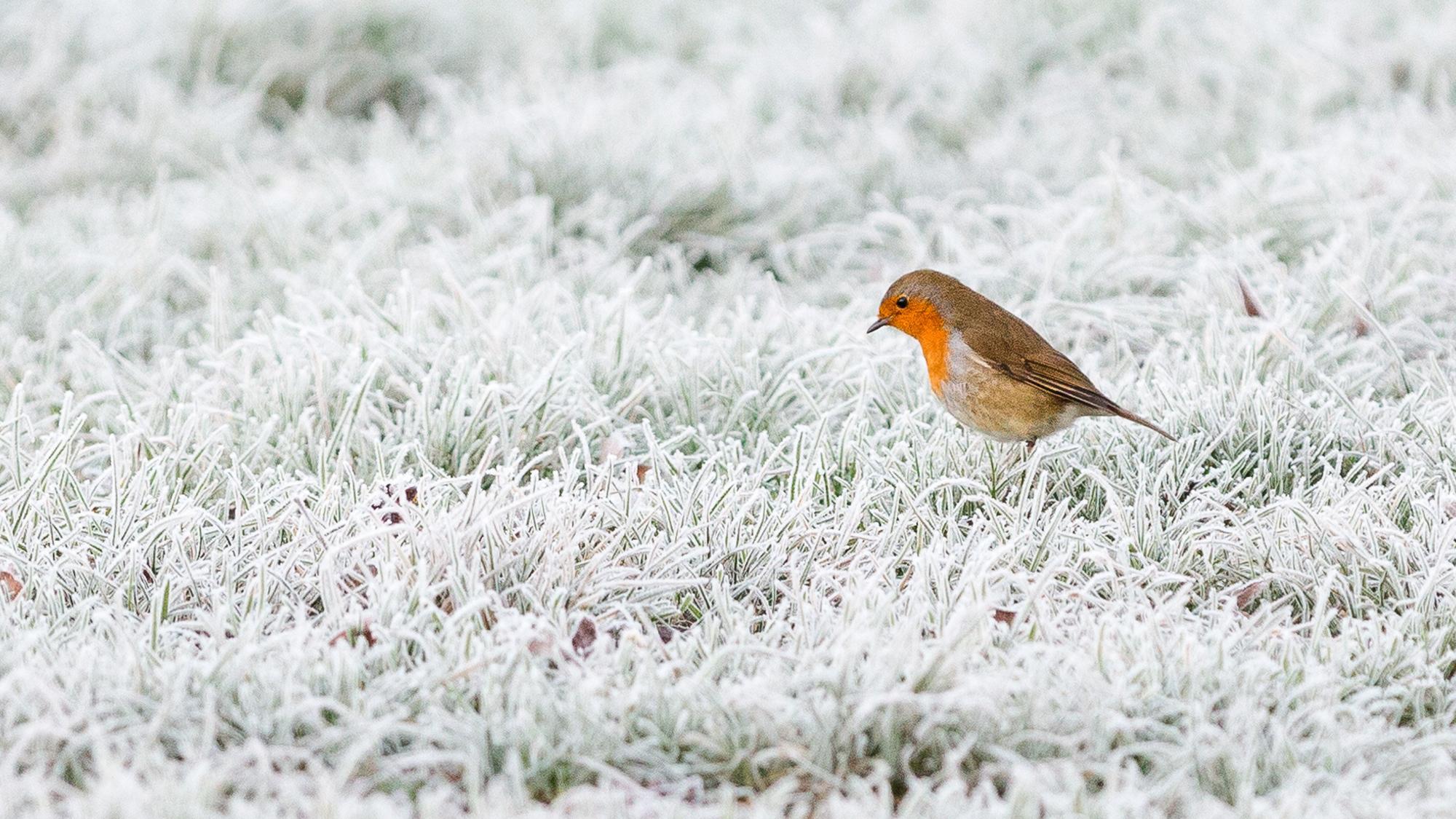 161230183447 12 Weather In Focus December
