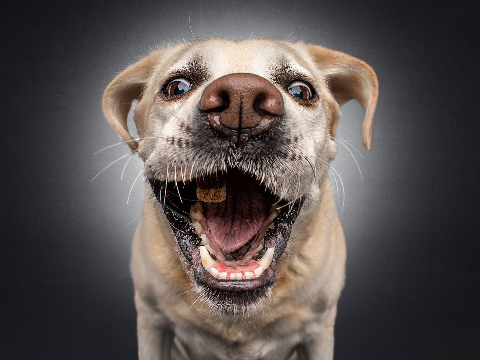 The unbridled joy of dogs catching treats