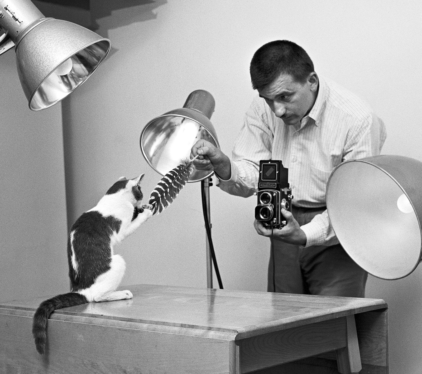 The Photographer of Cats Before the Internet