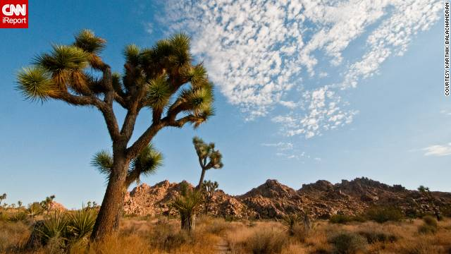 Joshua Tree was designated a national park in 1994.