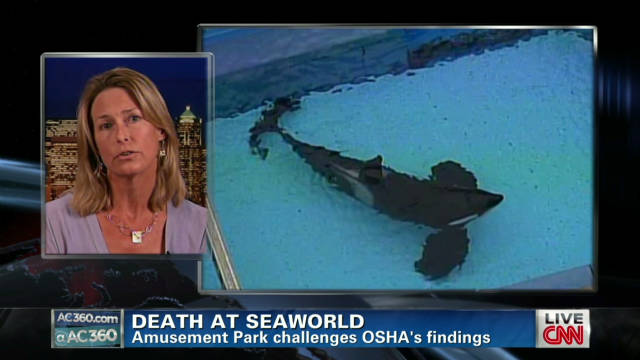 Incidents At Seaworld Parks: Hearing Begins In Death Of SeaWorld Trainer