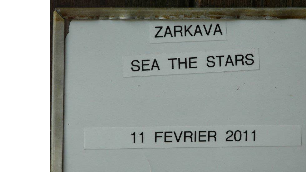 The foal's rich stock is displayed on this sign outside of his stable, confirming the date of his highly-anticipated birth.