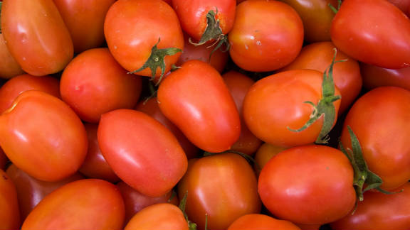 Pre-sliced Roma tomatoes purchased at deli counters in Sheetz gas stations infected more than 400 people in the summer of 2004. Two other smaller outbreaks in the United States and Canada also occurred that summer and were linked back to a tomato-packing house in Florida.