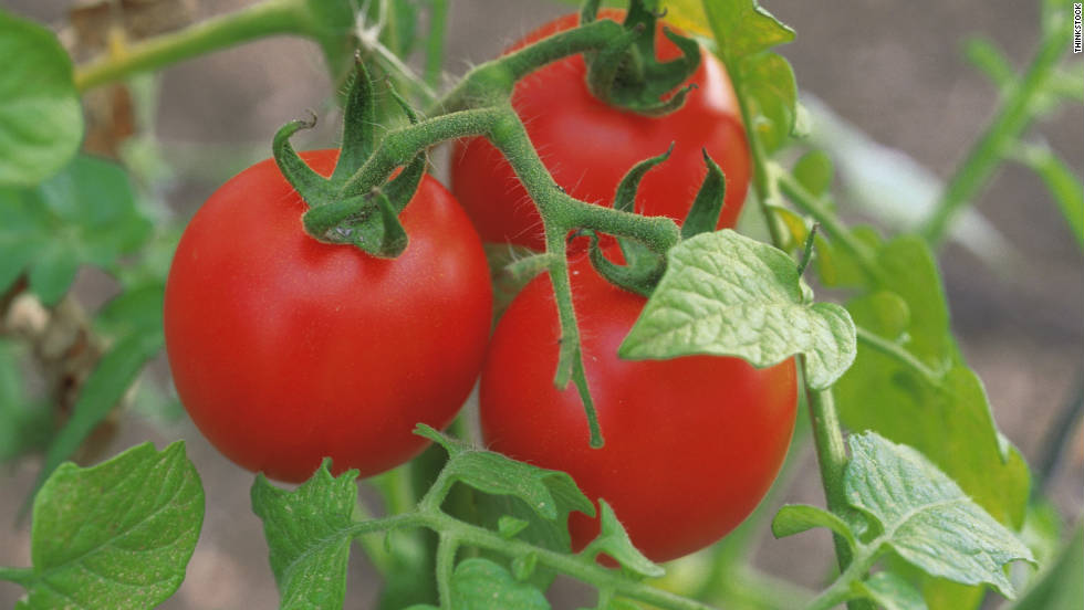 "During 2005 and 2006, <a href=""http://www.cdc.gov/mmwr/preview/mmwrhtml/mm5635a3.htm"" target=""_blank"">four large outbreaks of salmonella</a> infections hit 21 states in the United States. Tainted tomatoes being served in restaurants were found to be the cause. Investigators linked the produce to fields in Florida, Ohio and Virginia."