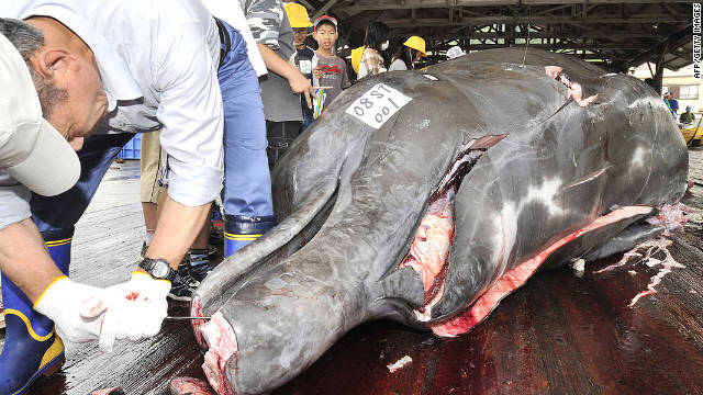 South Korea explains why it wants to start whaling again