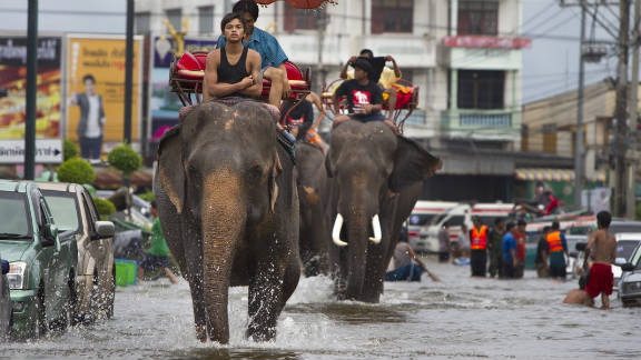 Thai mahouts ride their elephants through the flooded Ayutthaya streets on October 10, 2011.