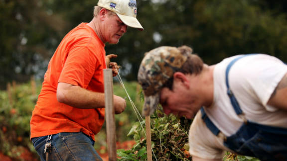 Brothers and new farmhands Jessie Lessley, left, and Jeb Lessley work on Ellen Jenkins' tomato farm.