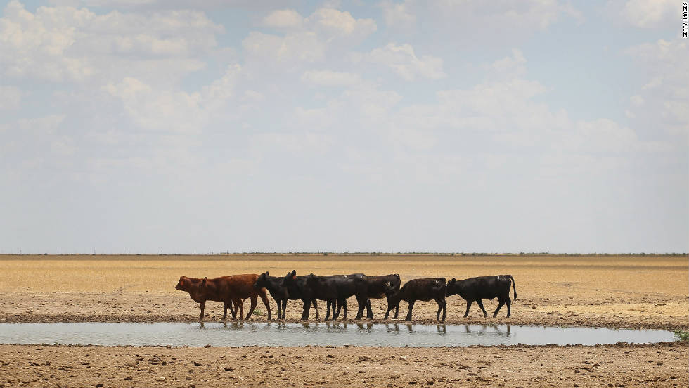Dry weather and high temperatures have wreaked havoc on the farms and pastures in Texas, Oklahoma, New Mexico, Arizona, southern Kansas and western Louisiana.  So far, the direct losses to crops, livestock and timber are approaching $10 billion and the amount is expected to rise as the drought continues.