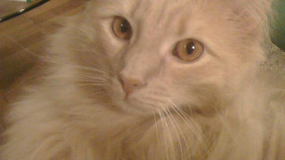 Jack the Cat went missing at John F. Kennedy International Airport on August 25. He was found last month.