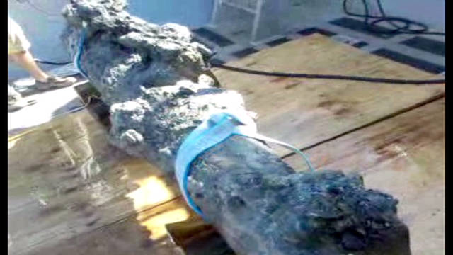 Cannon from Blackbeard's ship recovered