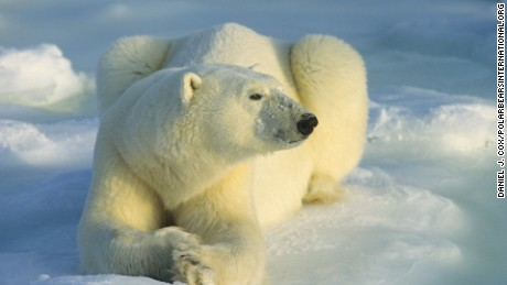 Scientists rescued from polar bears in Arctic