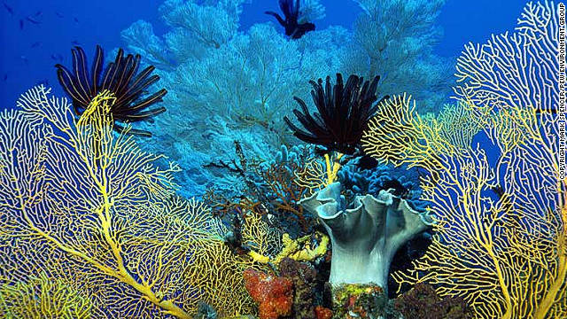 The Australian government has announced a draft plan to protect the Coral Sea