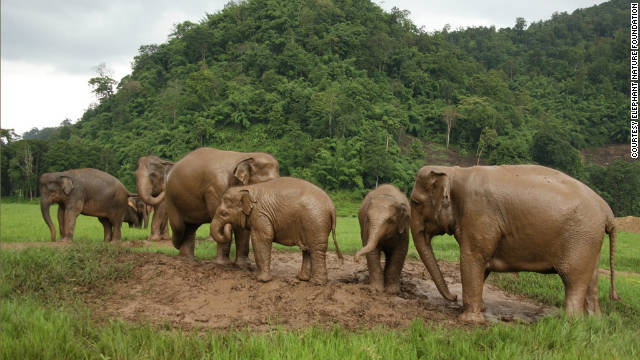 Family matters: Elephants in their natural family group at a rescue center in northern Thailand