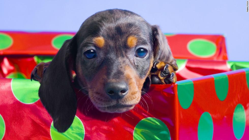 preparing to put a puppy under the tree cnn