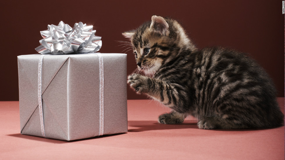 Fun gifts to spoil your pet this Christmas - CNN