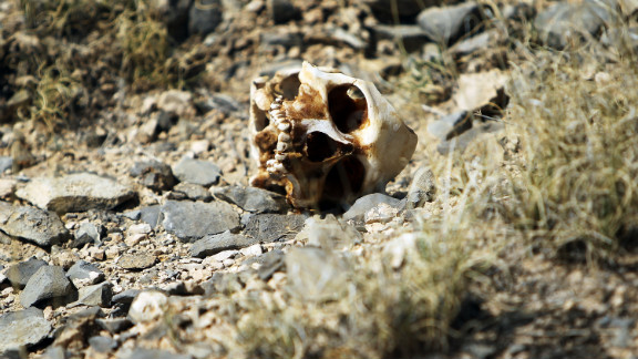 A skull of someone thought to be a victim of drug violence lies on the ground in Ciudad Juarez in early 2010. The border city of Juarez has been racked by violent drug-related crime, making it one of the most dangerous cities in Mexico