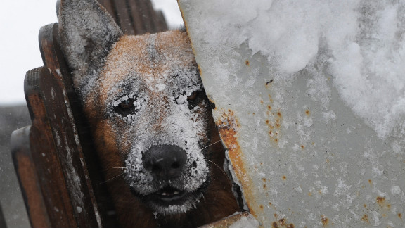 A dog takes shelter from a blizzard in Catelu, Romania, on January 26.