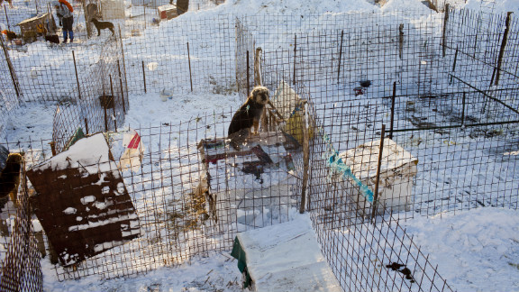 """Animal lovers helped remove the snow that covered the """"second chance"""" dog shelter outside Glina, Romania on January 28."""