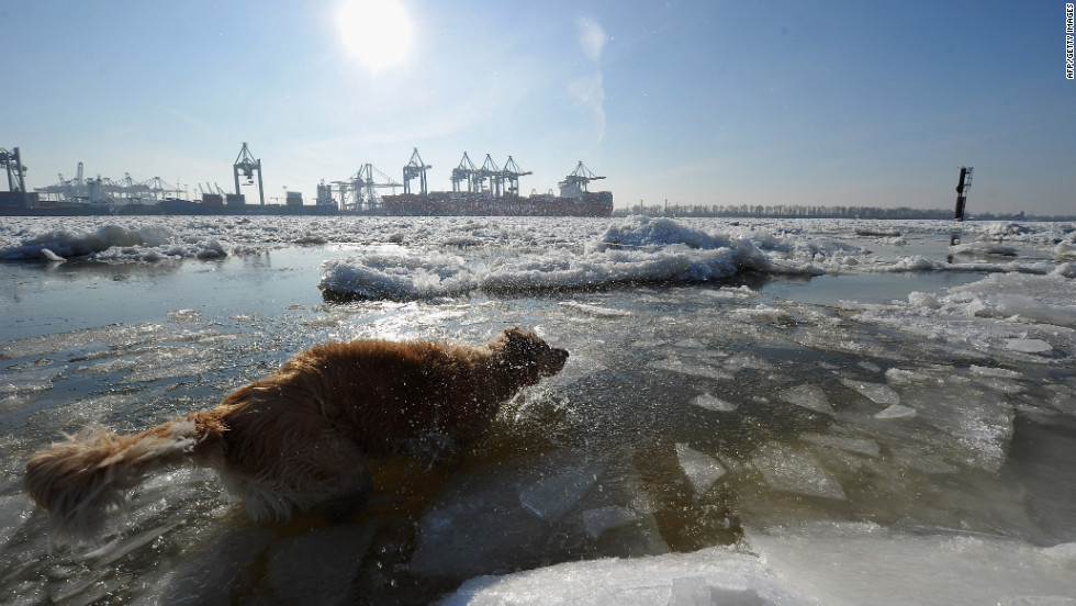 A dog plays in the icy Elbe River on Monday, February 6, in Hamburg, Germany. The Arctic cold snap in Europe has claimed nearly 300 lives, brought air travel chaos to London, and dumped snow as far south as Rome and even North Africa.