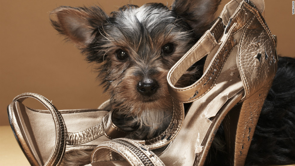 Keep Your Dog Away From Shoes If They 39 Re E To Chewing