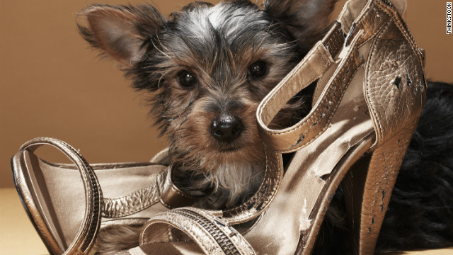 Keep your dog away from your shoes if they're prone to chewing on them.