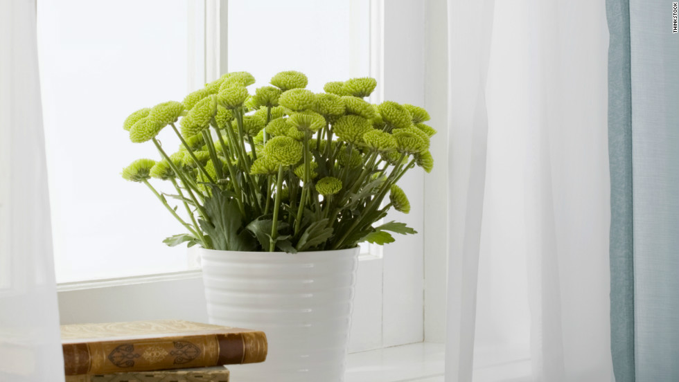 Make Sure You Know What Kind Of Light Your Indoor Plants Need To Receive To  Thrive