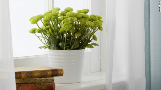 Make sure you know what kind of light your indoor plants need to receive to thrive.