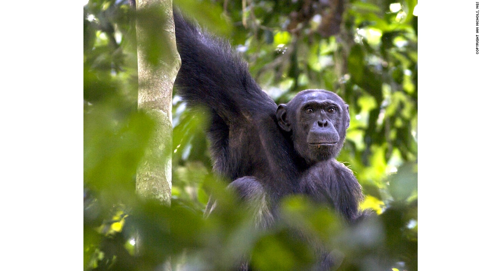 The central African country has extended protection of the Nouabale-Ndoki National Park by over 100-square miles.