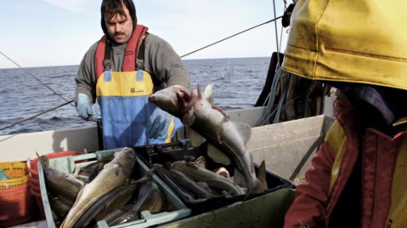 Dennis Robillard, left, and Kevon Hughes fish for cod off the coast of Massachusetts.