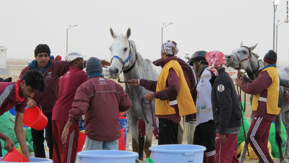 After each lap, the horses are subjected to medical checks. This is to ensure they are physically capable of surviving another lap.