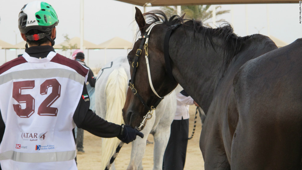The Arabian horse is said to be a gift to mankind from Allah. Today's racing thoroughbreds can trace their DNA to three stallions imported to Britain in the 18th century.