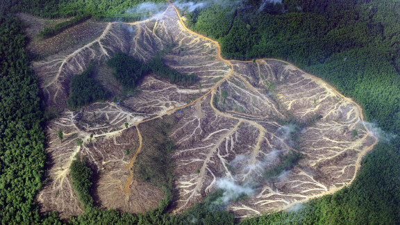 A picture dating from 2010 showing a logged area in the mountains of Jambi province in Indonesia