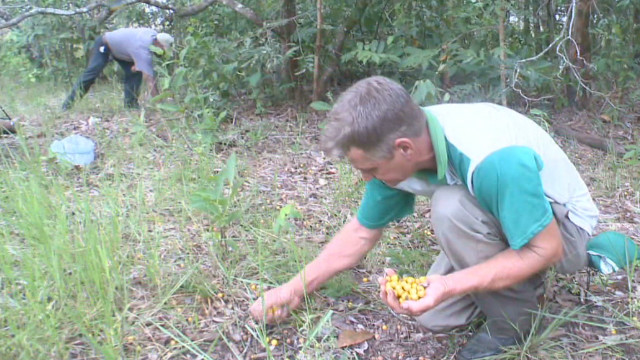Replanting Brazilian Forests